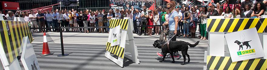 Instructora y perro pasando la pista de obstáculos en una exhibición