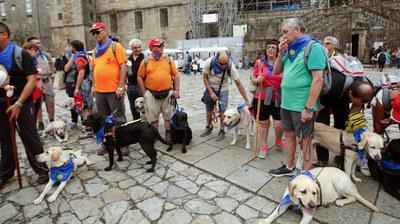 Peregrinos y sus perros guía a su llegada a Santiago, en la Plaza del Obradoiro. Foto: La Voz de Galicia
