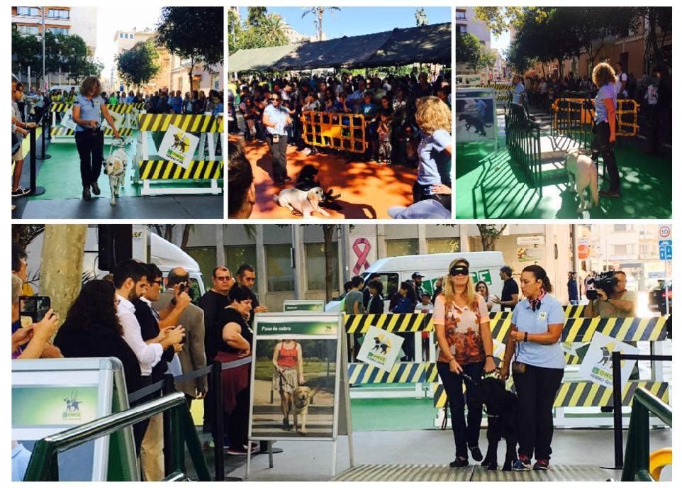 Actividades durante el Día de la ONCE en Palma