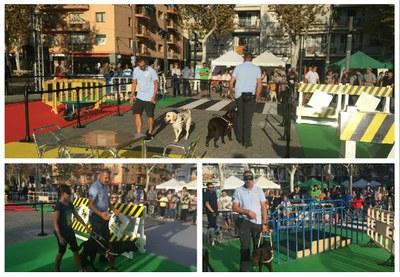 Actividades durante el día de los animales Vilanova i la Geltrú