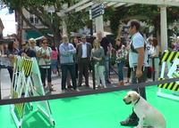 Exhibición de perros guía en Alzira