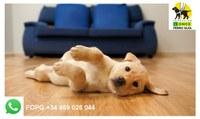 cachorro perro guía