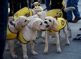 Cachorros de la Fundación ONCE del Perro Guía en las Vueltas de San Antón