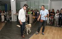 exhibición perros guia en Microsoft