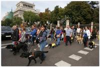 perros guía y sus usuarios por Madrid
