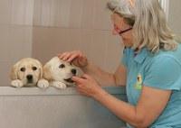 Trabajadora de la FOPG junto a un cachorro futuro perro guía