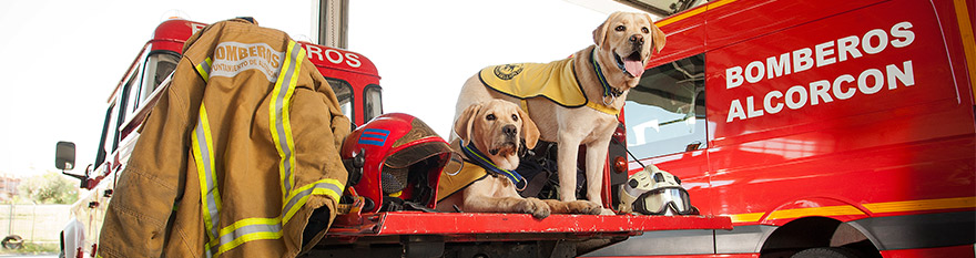 Dos cachorros en educación sobre un coche de bomberos