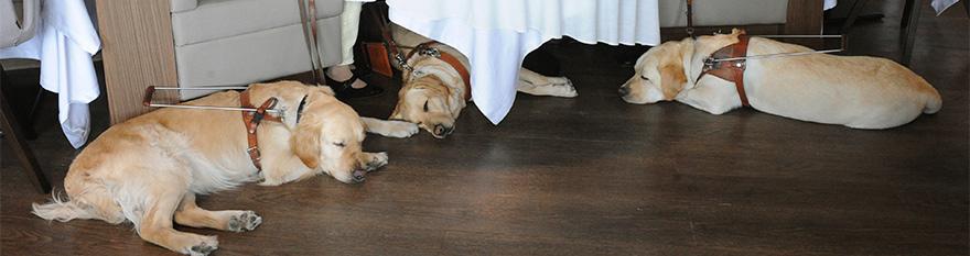 Tres perros guía tumbados en un restaurante