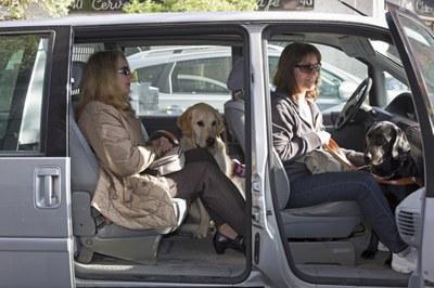 Dos perros guía con sus usuarias en el interior de un vehículo