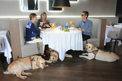 Tres usuarios con sus perros desayunan en una cafetería