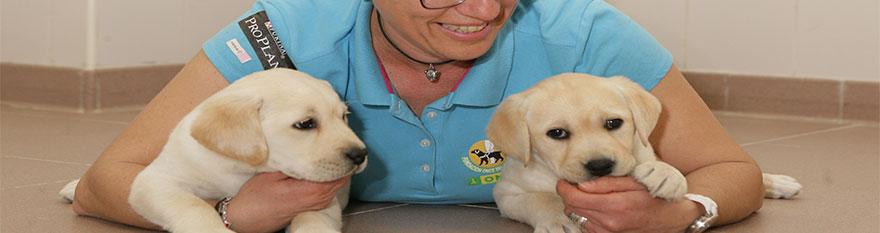Dos cachorros de Labrador en nuestras perreras