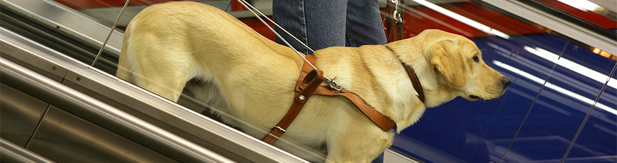 Perro entrenando en escaleras mecánicas